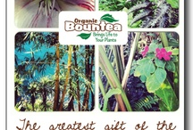 Original Garden Pics & Factual Inspirations / Here are some of our own garden pics with Bountea facts and inspirations. Please pin!