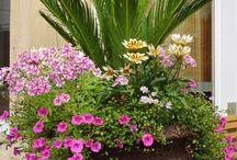 my pot plant