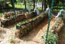 Hay bale gardening raised beds / Hay bale gardening raised beds