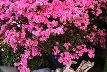Giardinaggio / Piante verdi e fiorite per il giardino