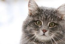 Winter Cuties