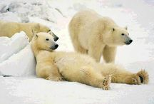 Polar Bears / by bobbi houle