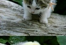 cute animal's