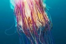 Art Ed. Under the Sea >O
