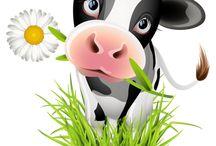Krowy, cows