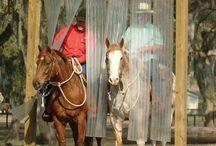 horse summer ideas