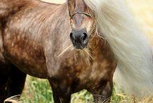 Das Glück der Erde, liegt auf dem Rücken der Pferde...