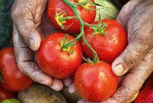 Nos bons fruits et légumes / Avec plus de 1700 agriculteurs et producteurs partenaires en France, nous vous proposons toute l'année de bons fruits et légumes de saison qui ont poussé près de chez vous !