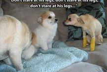 Amusing Dogs