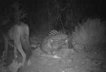 Bush Camera / Check out the images snapped by our bush-cam at night on the game reserve.