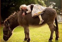 I <3 Horses / Representations of the beautiful equine world / by MyPerfectGift .com