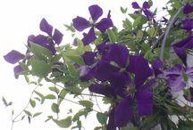 Gartenblog - Gardenblog / Gartenblog von Pascale Die Bilder