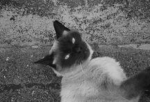 Gatos / Gatos