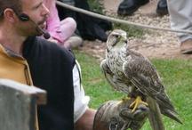 Falcon Faucons et Fauconniers