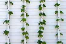 FOLIAGE_ivy_vines