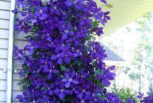 Blomster og staudebede