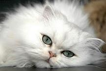 Kitties !