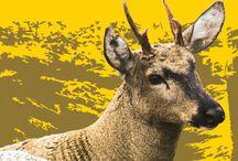 """""""Protege la Biodiversidad: 40 años de CITES en Chile"""" Museo de Historia Natural de Valparaíso / Exposición organizada por el Museo de Historia Natural de Valparaíso, y patrocinada por el Comité Nacional CITES, el Gobierno de Estados Unidos y la Secretaría CITES de Ginebra. Conoce más de Cites Chile: www.citeschile.cl"""