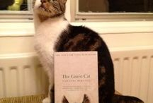 Book Collection - Novels with a CAT at their heart / Love to read about cats as part of a good novel?