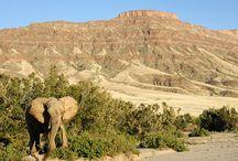 Omanda Desert & Wildlife Tours / Omanda organise en Namibie des voyages et des safaris à la carte. Le Kaokoland est notre spécialité, la recherche des animaux comme les éléphants du désert en dehors des parcs nationaux aussi.  Nous vous ferons découvrir, sur de petites pistes des coins méconnues de Namibie aux paysages incroyables.