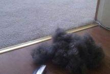 Dog hair