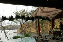 ARTFLOWER: Hanging gardens & Corals