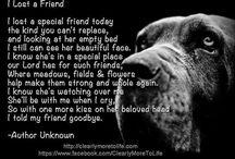 Pet loss grief