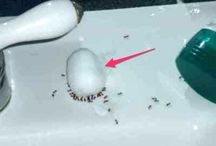 Ant Remedy