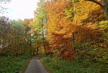 Landschaft Lippe