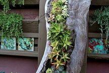 ogród kwiaty