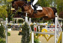 EQL.CO Equestrian Events