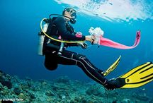 Gear Up / Prepare smarter: Dive with safety gear / by Divers Alert Network