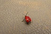 Pests / by Scott Hokunson