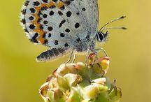 Butterflies / by Tammy Lejeune