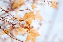 Autumn / Herbst / Crisp clear and colorful