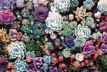 Cacti & Succulents / Water-wise, unique and colorful these beautiful plants are the perfect addition to your landscape.