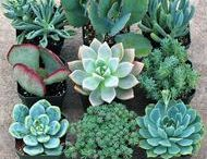 Plants / by Sara Kestlinger