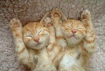 I Heart Cats / Yes, I am a crazy cat lady and I am not ashamed. This is my happy page. MEOW!