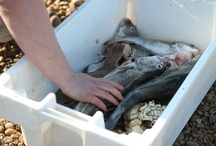 Seafood fresh catch