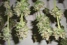 pinnwand / Pflanzen