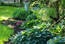 Shade Gardening / Just because you have a shady garden, doesn't mean you don't have amazing choices for planting!