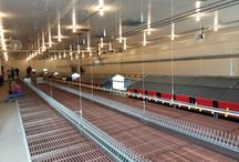 Rehoboth Farm Project - PRIMA Power Systems Inc.