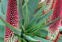Design: Indigenous Planting