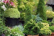 Container Gardening