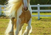 ... Pferde ...