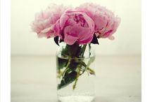 Fleurs / by Tessa Horehled