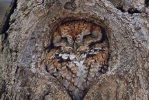 Owls are not what they seem