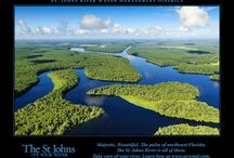 Vistas of the river / Vistas of the St. Johns River in Florida