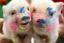 Piggys / We are a little pig pls good to us  / by Phakaon J.
