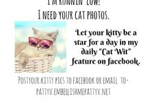 """""""Cat Wit"""" Photos and Quotes / Want YOUR kitty to be Featured?   I'll match up your kitty with a quote from  Kate May's book, """"Cat Wit"""". Message me your kitty photo on my Facebook page, Patty Virginia. Let your kitty  be a Star for a day!"""